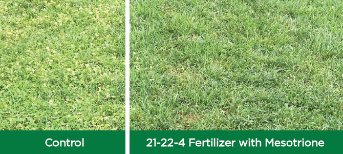 Fert+Mesotrione - The Andersons Plant Nutrient Group
