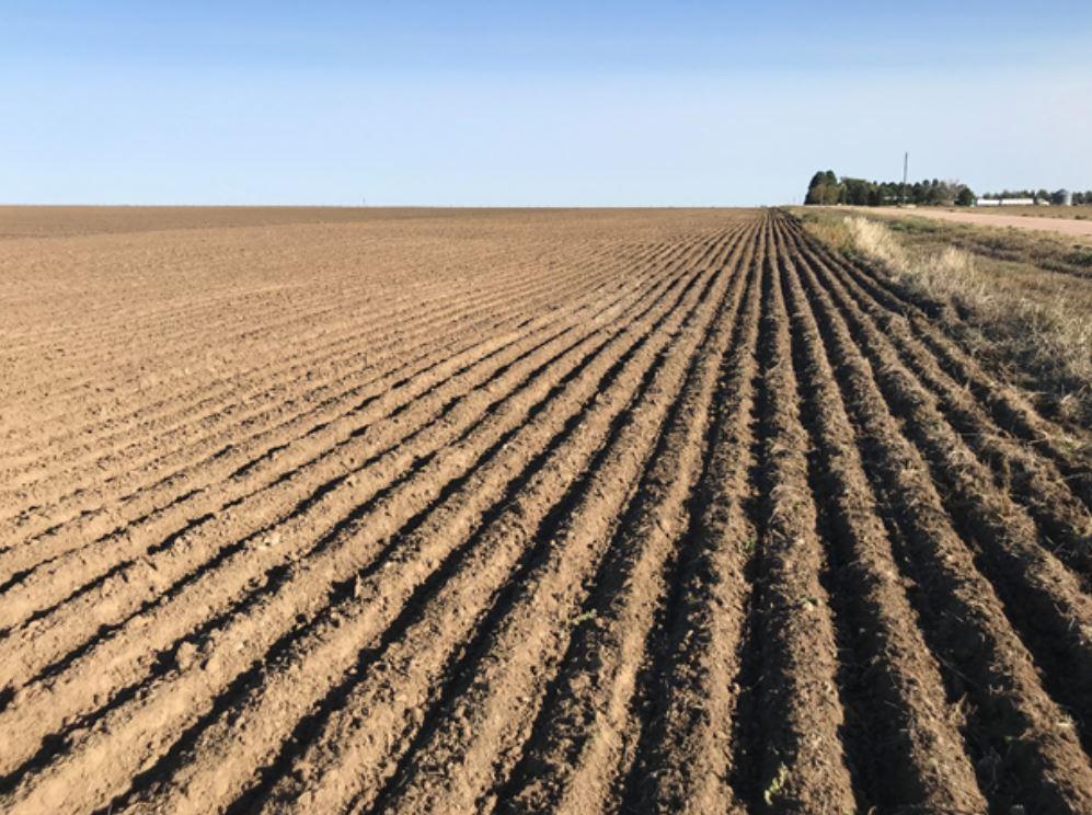 Organic Update Wheat Planting