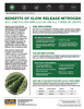 The Andersons Technical Bulletin 08 Benefits of Slow Release Nitrogen